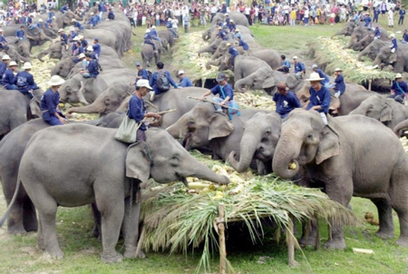 cementerio-de-elefantes