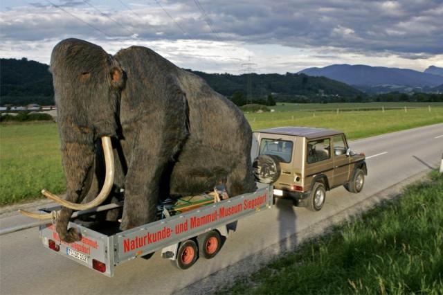 con el mamut de carga!