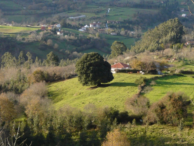 Llugas- Villaviciosa
